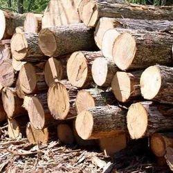 Pine Hard Wood Log