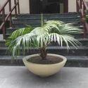 Rhea Bowl Planter