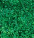 Rajni Coriander Seeds