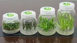 Plant Tissue Culture Testing Lab Setup Services