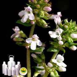 Thyme CT Linalool Oil Certified Organic