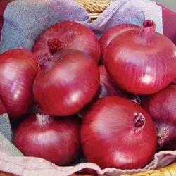 A Grade Maharashtra Red Onion, Plastic Bag, Onion Size Available: Medium