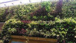 Vertical Garden Landscaping Services