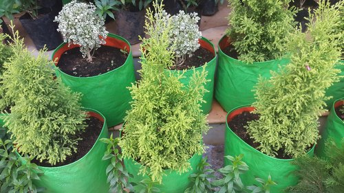 Outdoor Decorative Plants Grow Bags