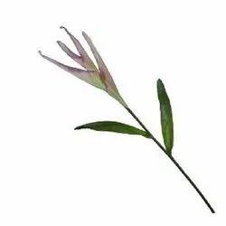 Heliconia Stick