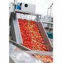 Tomato Processing Machine Consultancy Services
