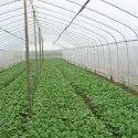 Garden Insect Net