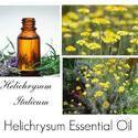 Helichrysum Oil Immortelle