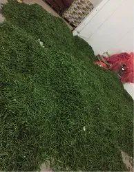 Gujarat Origin A Grade Green Chilli, Packaging Size: 5 Kg, Features: 4 Kg Box Packing