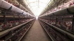 Advance H Type Poultry Cage