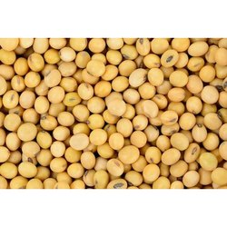 Indian Whole Soybean, High In Protein, Packaging Size: 50kg