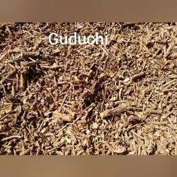Guduchi Extract