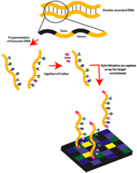 Whole Exome Sequencing with analysis