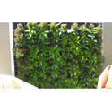 Vertical Green Wall Garden
