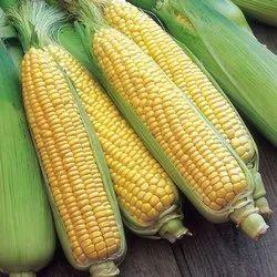 Yellow Sweet Corn, Net Bag, 20 Kg