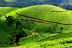 7 Days Best of Kerala Tour Packages
