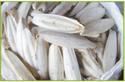 Cuttle-Fish-Bone Whole