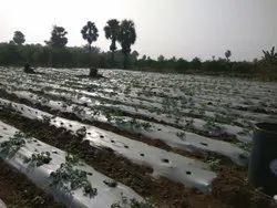 Agricultural Land Development in Hyderabad