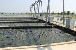In-Pond Raceway System