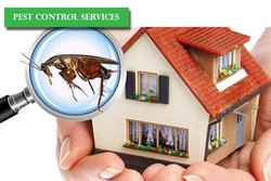 Herbal based Household Pest Control Service, in Maharashtra