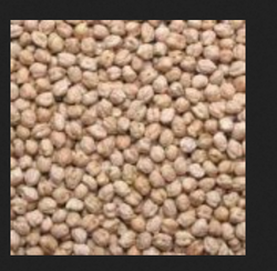 Whole Kabuli Chana