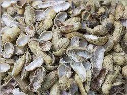 Groundnut Shell