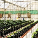 Greenhouse Farming Services
