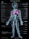 Human Physiology Charts