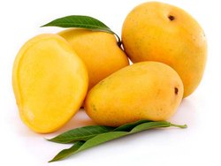 Yellow Organic Fresh Alphonso Mangoes, Carton, Packaging Size: 5 Kg