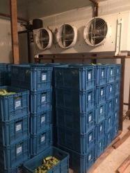 Semi-Automatic Banana Ripening Plant, 440V