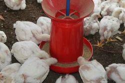 8 Kg Jumbo Poultry Feeder