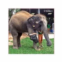 Elephant Prosthesis