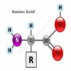 Amino Acid Testing Services