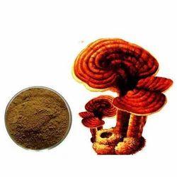Ganoderma Lucidum Extract (Red Rishi Mushroom Ext)-20% Polysacchride