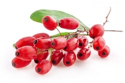 Berries in Hyderabad - Latest Price & Mandi Rates from Dealers in