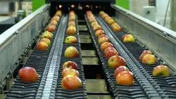 Apple Grading, Sorting and Packing Machine(Electronic)
