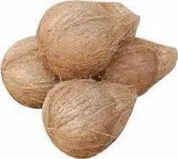 Shell Coconut
