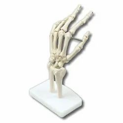 PVC Hand Joint Model