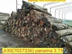 Panama Short Length