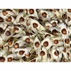 PKM-1 Moringa Plantation Seeds