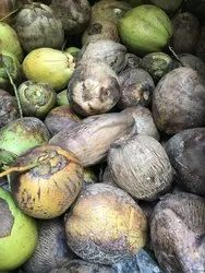 A Grade Solid Raw Coconuts, Packaging Size: Piece
