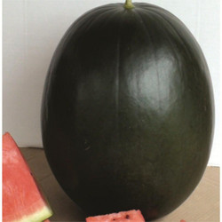 Black Boss Watermelon Seeds