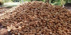 Pollachi Coconut Exporter