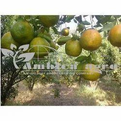 SANTARA FRUITS APLANTSantara Fruits Plants