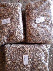 Moringa Seeds PKM-2 Variety