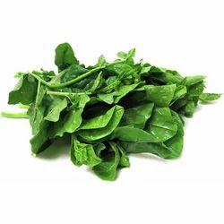 Malabar Spinach Leaf