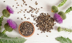 Milk Thistle Extract, Pack: 10 kg
