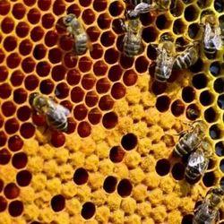 Bee Pollen - Honeybee Pollen Latest Price, Manufacturers & Suppliers