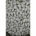 White Kaunch Seed