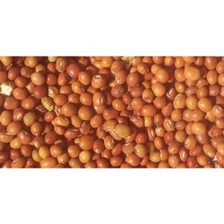 Adhishree Arhar Seed, Packaging Type: PP bag, Packaging Size Available: 50 kg